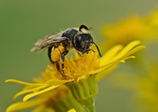 Bee Aware: Attracting Local Pollinators and Native Bees