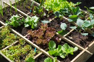 FPL Gardening Series - Square Foot Gardening