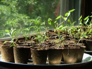 Gardening Series: Seed Starting